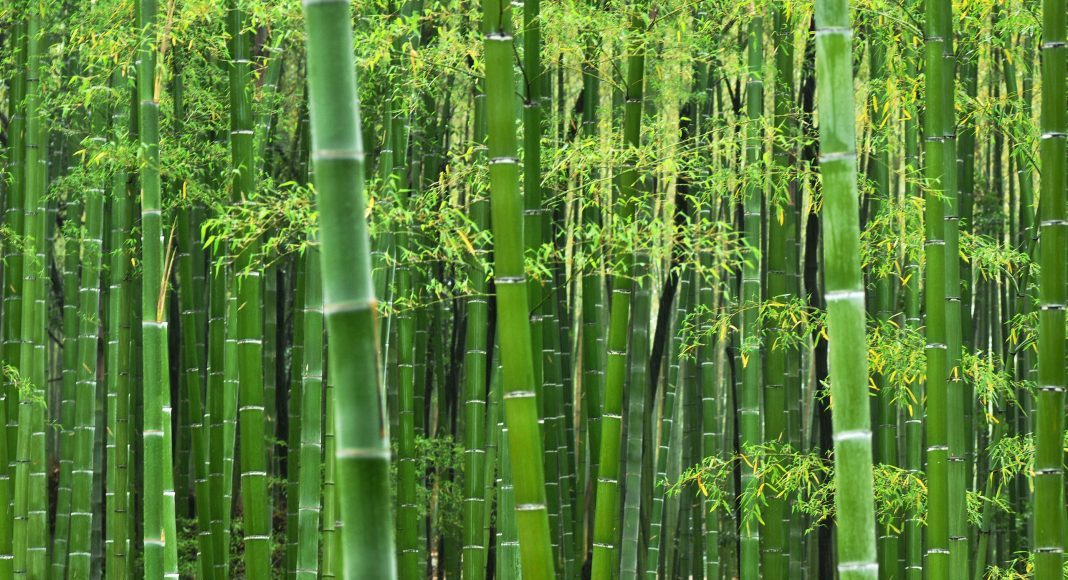 The Bamboo Industrial Park will be set up in Manderdisa in Dima Hasao. Photo courtesy: materialintuition.com