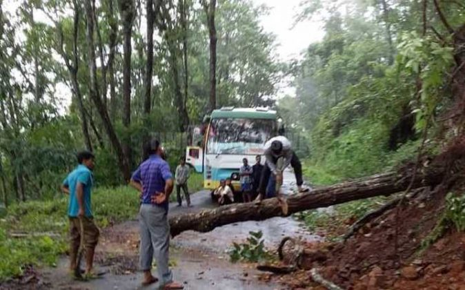 Uprooted tree disrupts traffic movement